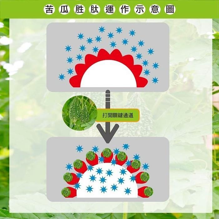 湧鵬生技-苦瓜胜肽(60粒X3盒)產品資訊