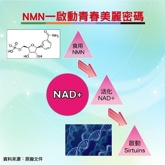 湧鵬生技-NMN素食膠囊(30粒X6盒)產品資訊